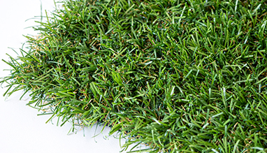 DUNDEE artificial grass